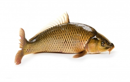 If you see this carp swimming in the lake his name is Lucky Rico Suave