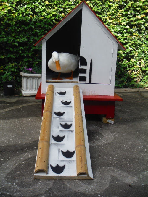 I tried to appease Duck since he was not happy with the award sign.  Told him I would build him a house.  He said he wanted a condo in south beach.  I got him this cute bungalow instead.  He immediately took a dump in the living room.  It's very hard to pleas a duck as I am finding out.